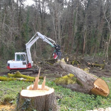 Woodland clearance & land reclaimation
